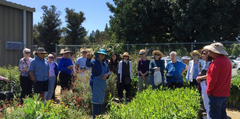 Emeritus DVC Garden Tour